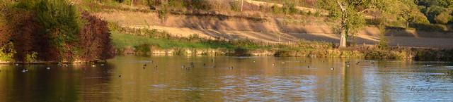Tous regroupés vers le dernier soleil sur le lac.