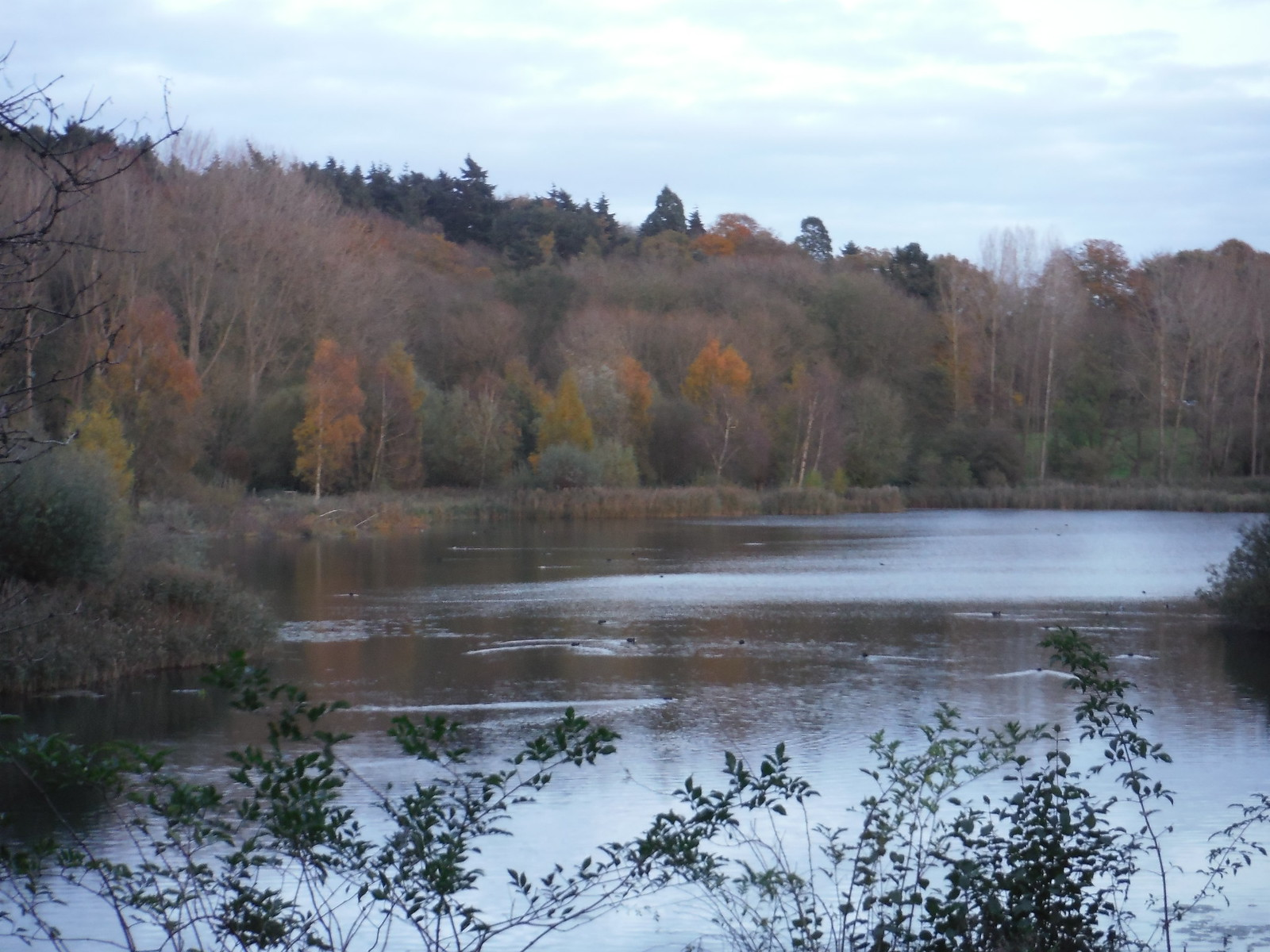 Hollycross Lake in Autumnal Colours SWC Walk 165 - St. Margarets Circular