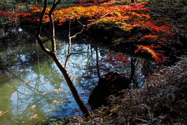 Tokyo autumn colour