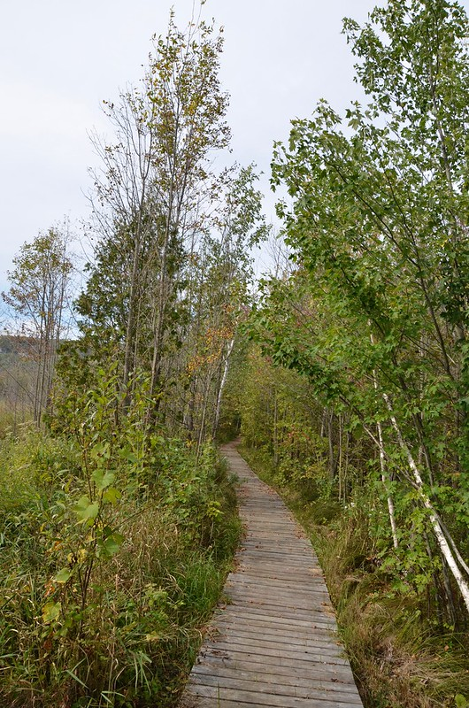 Wiarton Cape Croker boardwalk trail