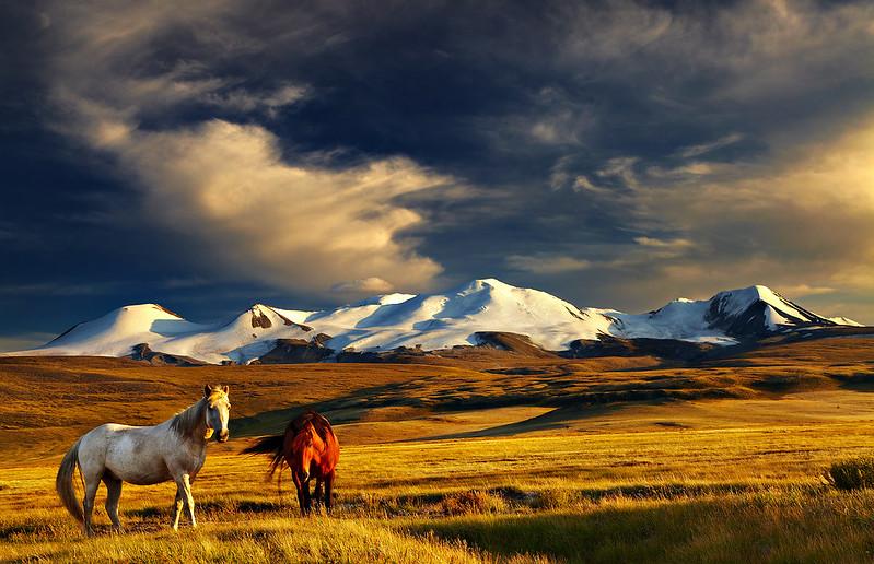 Khövsgöl en Gobi woestijn