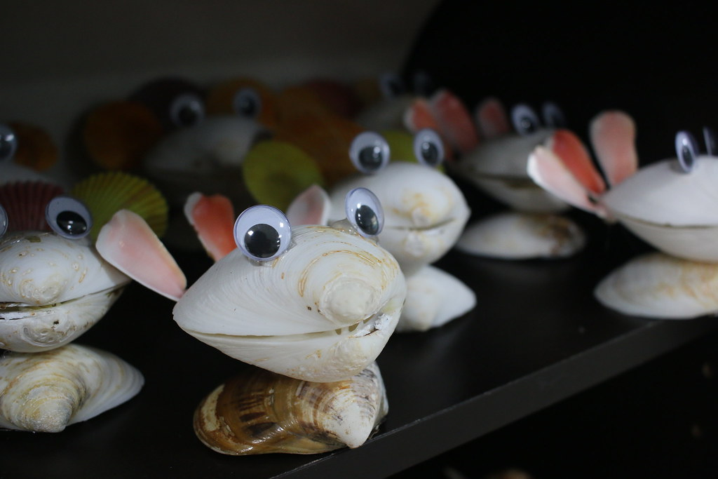口湖馬蹄蛤 (14)