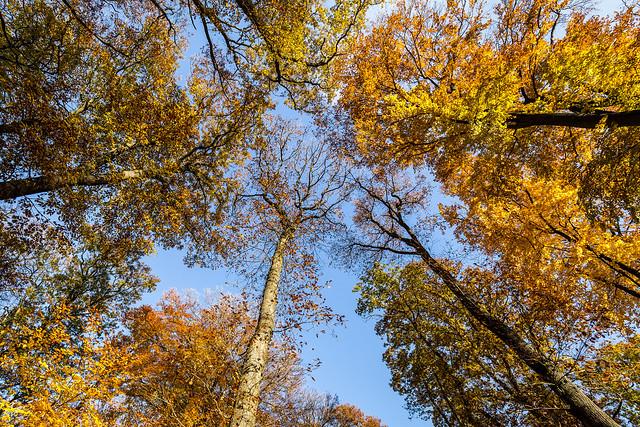 autumn colour burst