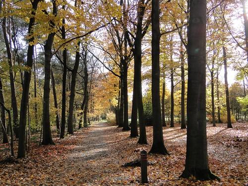 Autumn in Sterbos of Wuustwezel
