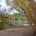 Autumn along the Verde River 2