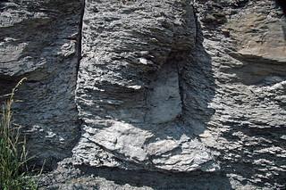Fossil tree trunk (Kanawha Formation, Middle Pennsylvanian; Interstate 64 roadcut, Kanawha County, West Virginia, USA) 5