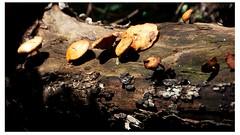 log and fungi