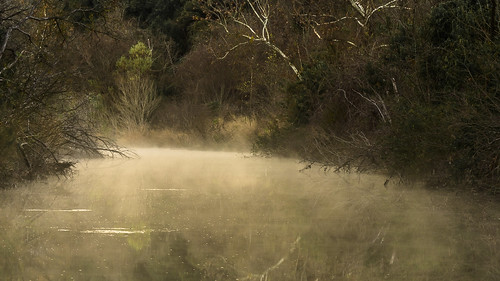 misty mist fog foggy creek stream winter texas austin texashillcountry