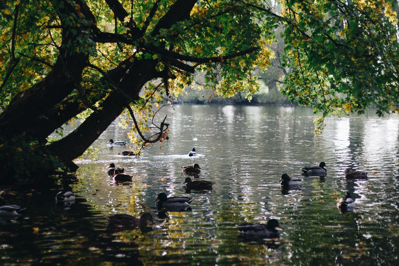 autumn fall trnava nitra jesen