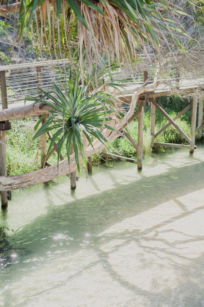 Fraser/k'gari - Eli creek clear water