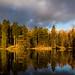 Tarn Reflections - Lake District - Cumbria