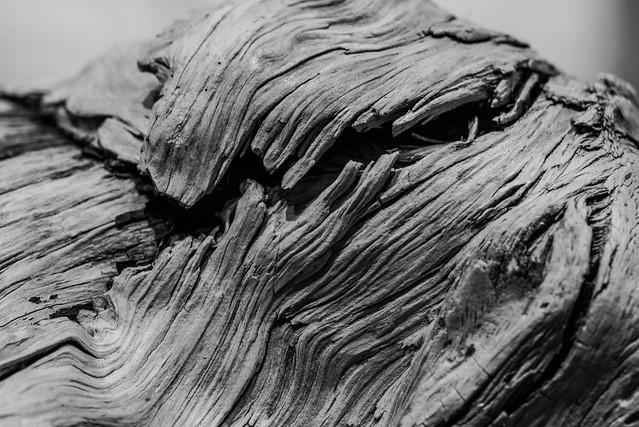 driftwood04a