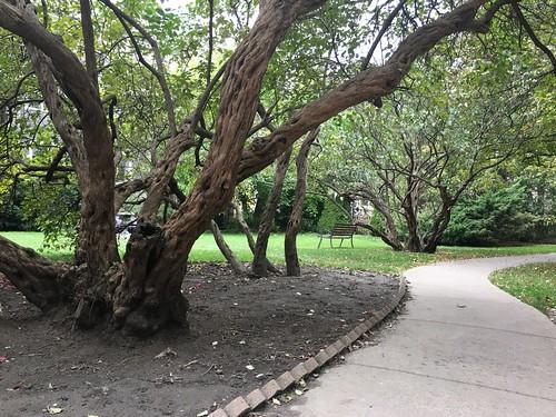 Gnarly bush