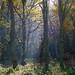 Himley Plantation, frosty autumn morning
