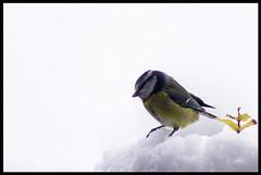 Winter Birds 2017