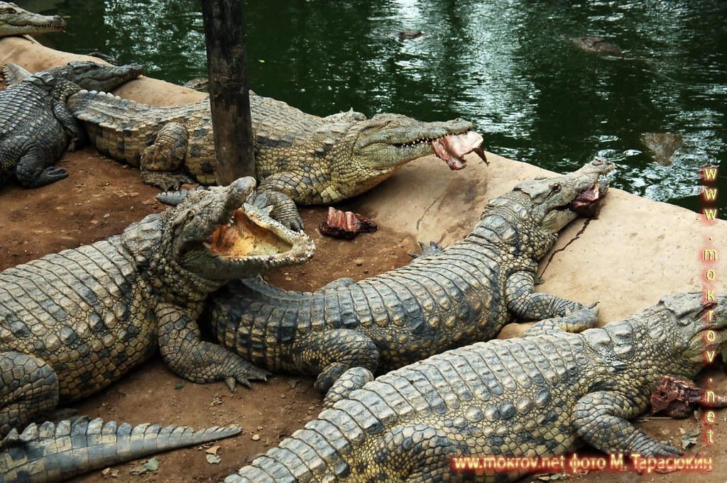 Крокодил, провинция Лимпопо ЮАР