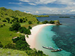 Komodo Island Tours Indonesia