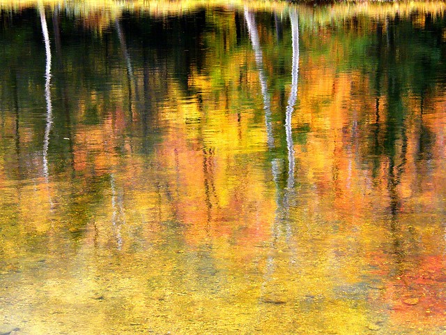 Abstract Fall Color Reflection