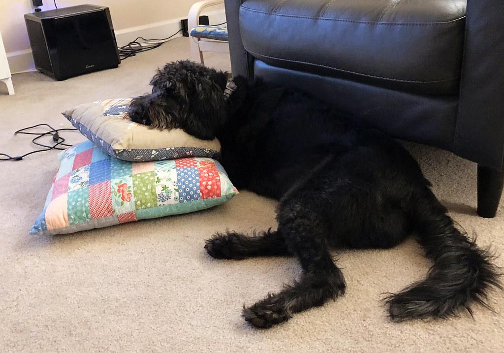 Pepper Loves Pillows