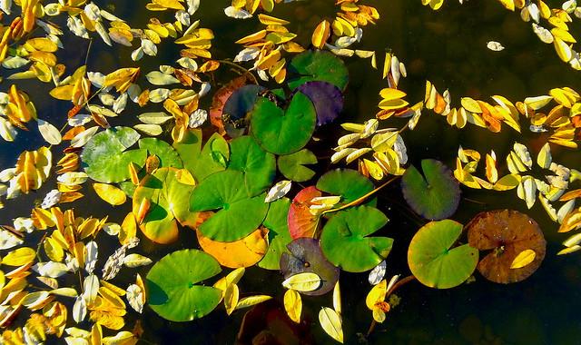Fall in Pond, Sony DSC-WX9