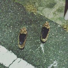 道に靴が一足落ちていた