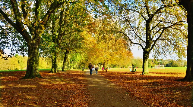 Autumn, Abington Park