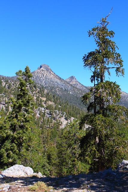 IMG_9664 Bristlecone Pine Trail