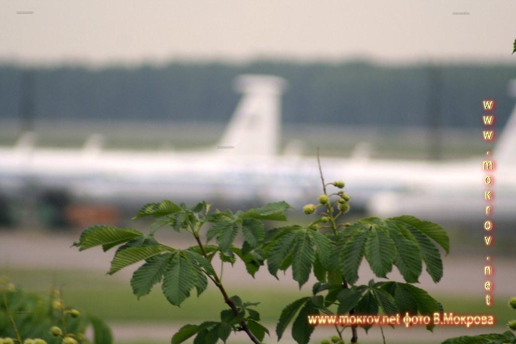 Аэродром Чкаловский фото
