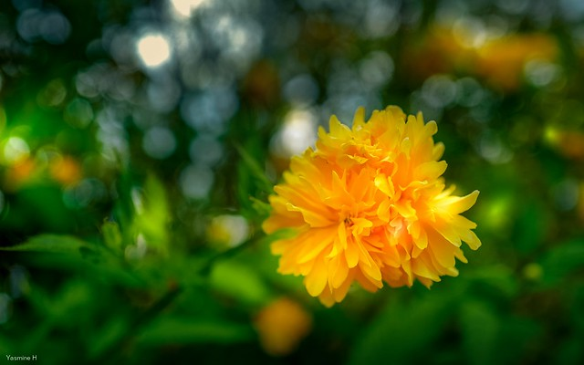flora 4046