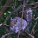 91 Squirrel