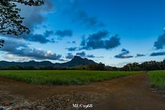 Mauritius - I colori della Madre Terra
