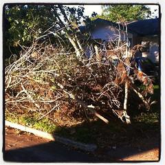 The latest batch of hurricane debris.