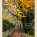 Runcorn Hill-10
