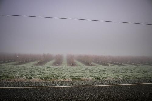 Skagit Valley Fog-002
