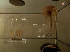 Blaschka's Jellyfish