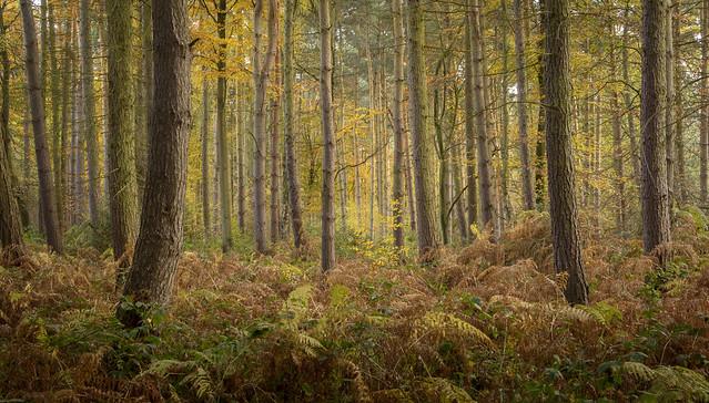Beacon Hill Wood