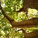 Karakter bir ağaç gibidir ve şöhret de onun göIgesidir. GöIge, oIduğunu düşündüğümüzdür; ağaç ise gerçeğin kendisidir. Abraham LincaoIn  Mutlu huzurlu pazarlarınız olsun ☺☺  #photograpy #denizli #nature #esentepe  #tree #branches #mycamera #kadraj #benimk