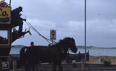 Queenscliff horse bus in deluge, near Phillip's Bay entrance