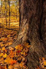 Fall in the Mountain