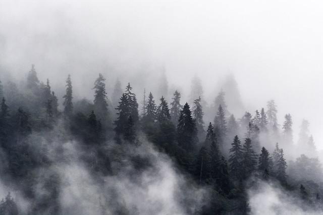 Rauschen im Nebelwald