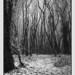- Enchanted Wood