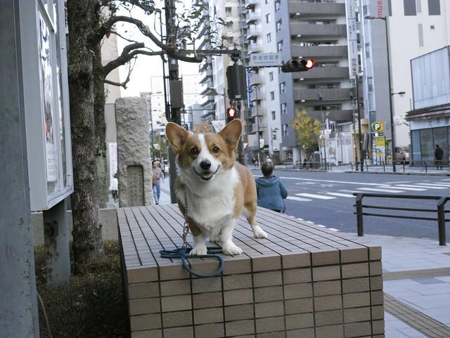 EIN 今日のお散歩♪