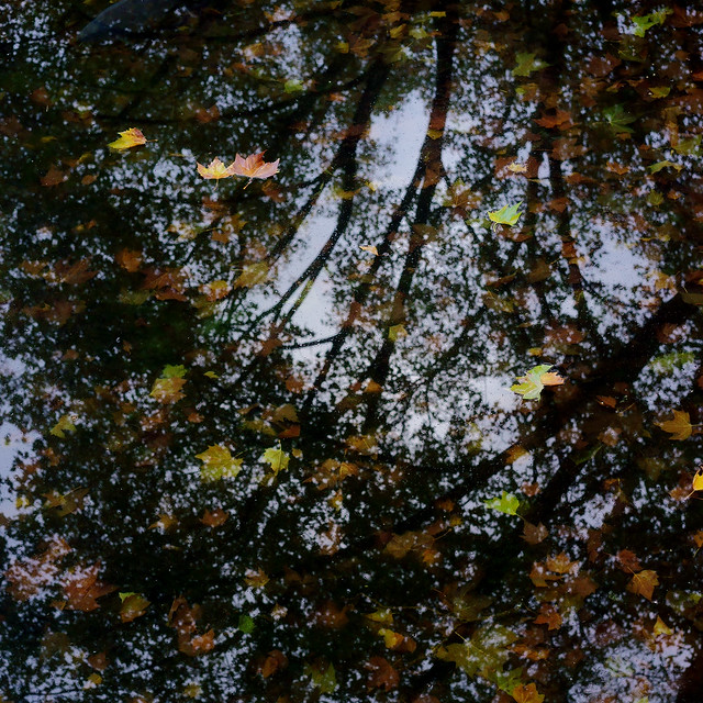 autumn leaves on water 2@Kö-Graben(moat), Düsseldorf