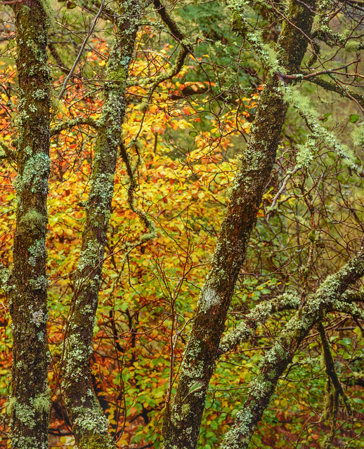 Autumn Warmth, Glencoe