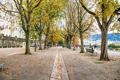 My lovely Geneva - Promende de la Treille - D85_0092