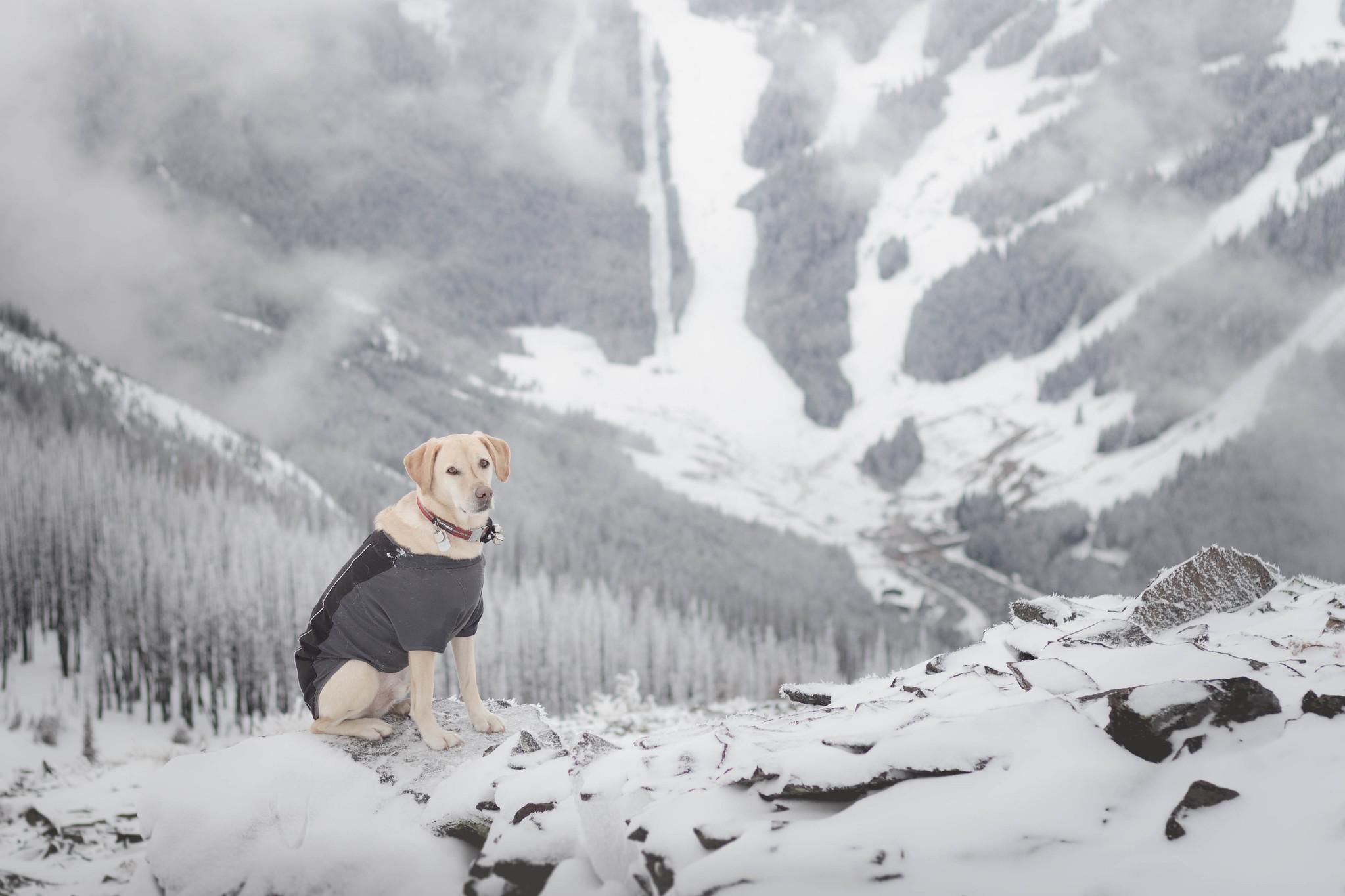 Summit dogs on Norse Peak