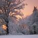 Suddenly it is winter by violarosa1