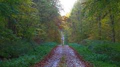 Forêt de Retz (sans barrière d'interdiction !!!)