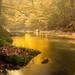 En ríos de oro by Giacomo della Sera
