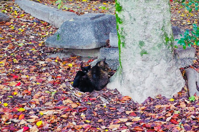 Today's Cat@2017-11-09